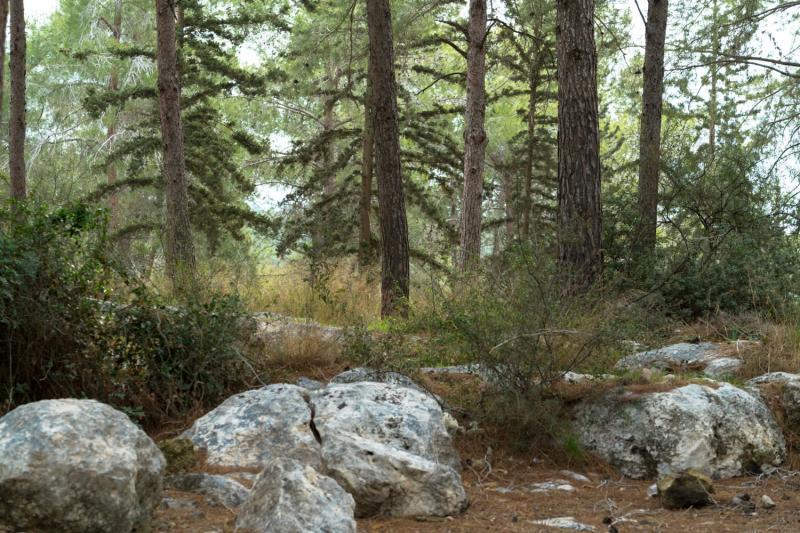 יער צרעה  אזור בית שמש  .