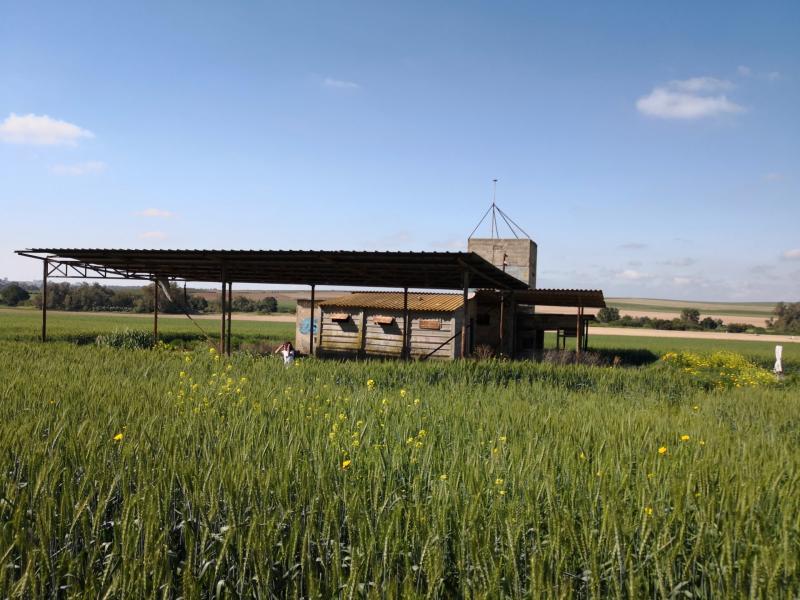 מבנה עתיק כנראה שימש להכנת קמח ואגירת חיטה