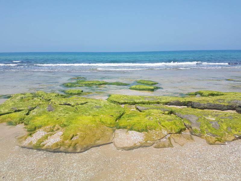חוף ניצנים
