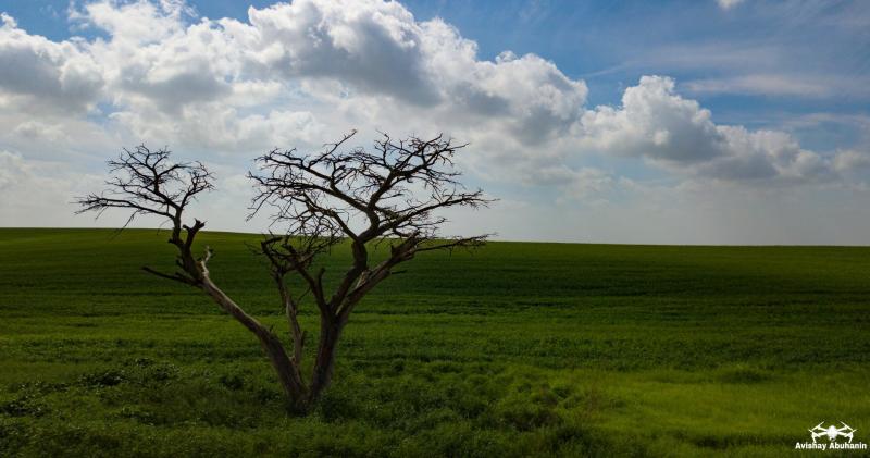 עץ יחיד בשדה גדול