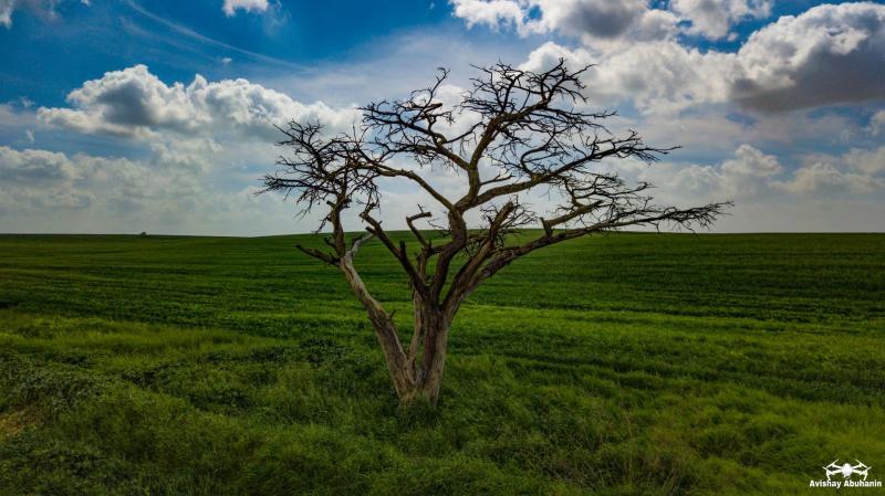 העץ  במאגר המיים