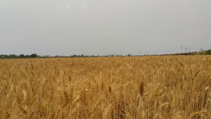 שדה באזור.