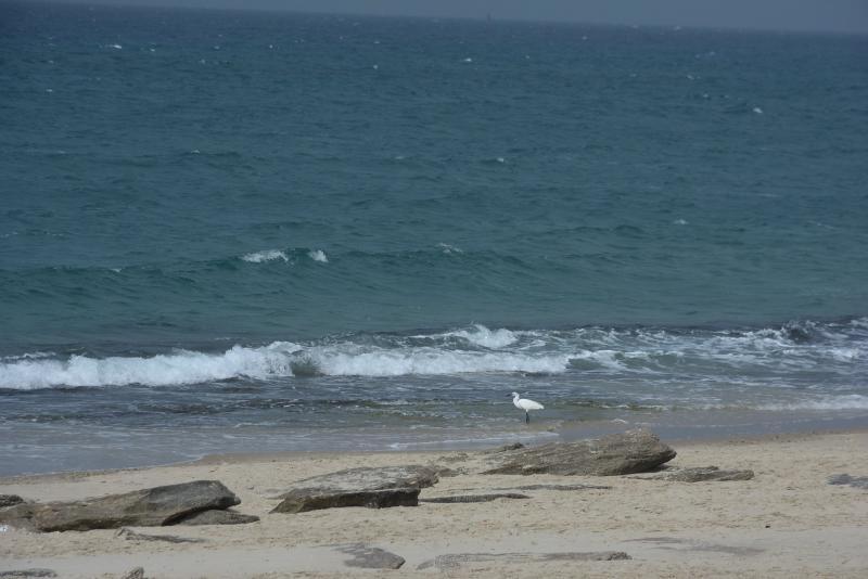 שחף מול הגלים