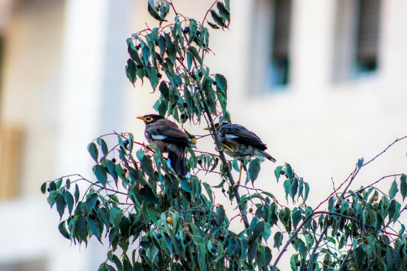ציפורים על עץ