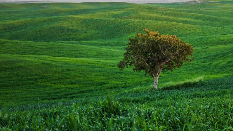 העץ הבודד, בתרונות רוחמה