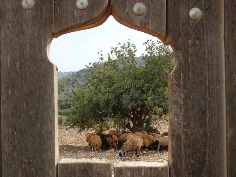 חווה חלב עם הרוח  לגידול כבשים ועיזים