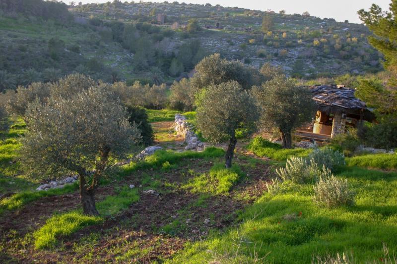 בית בד חקלאי קדום בפארק נאות קדומים