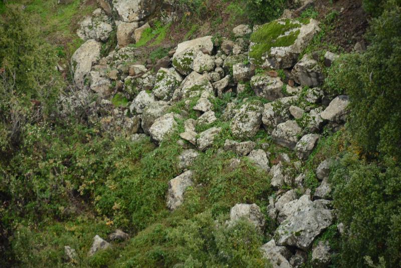 שפני סלע