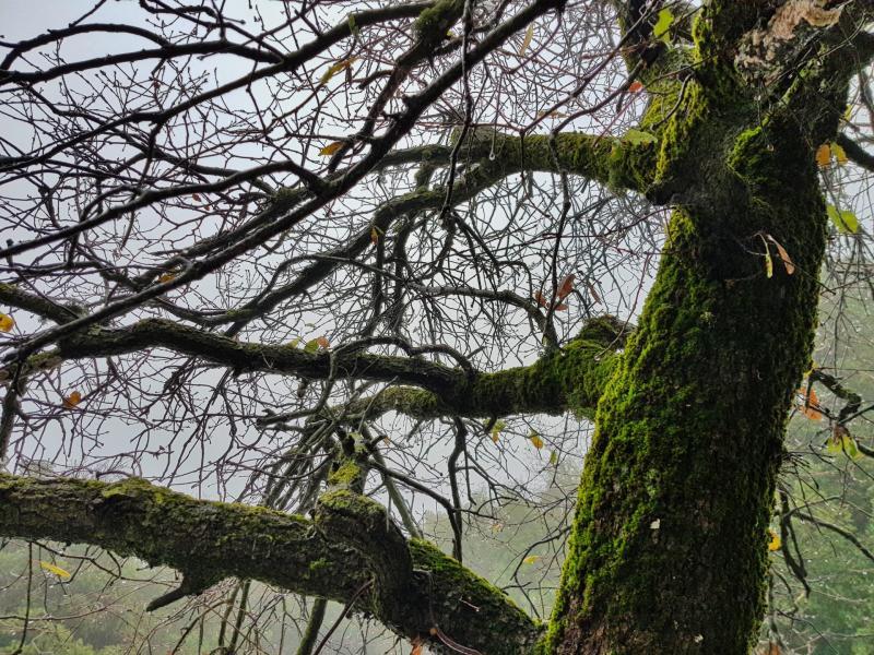 יער אודם