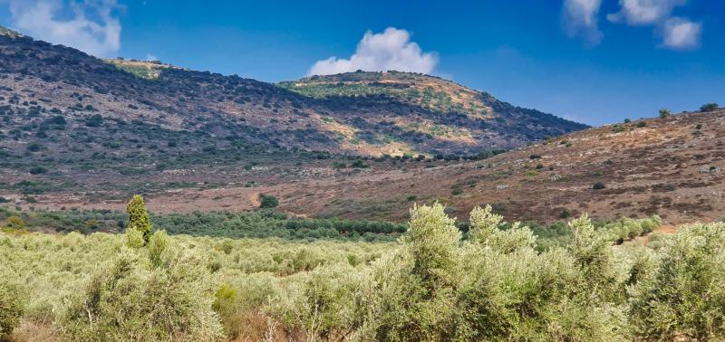 שמורת הר עצמון