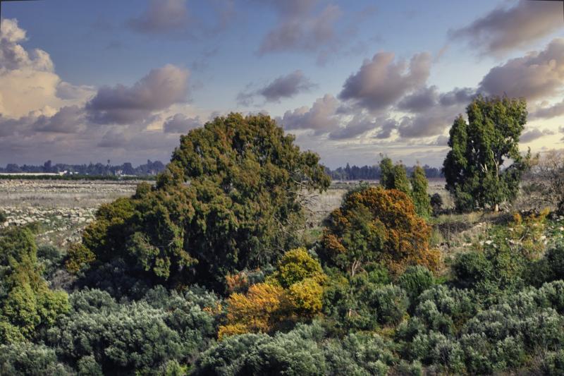 שמורת טבע נחל אלעל