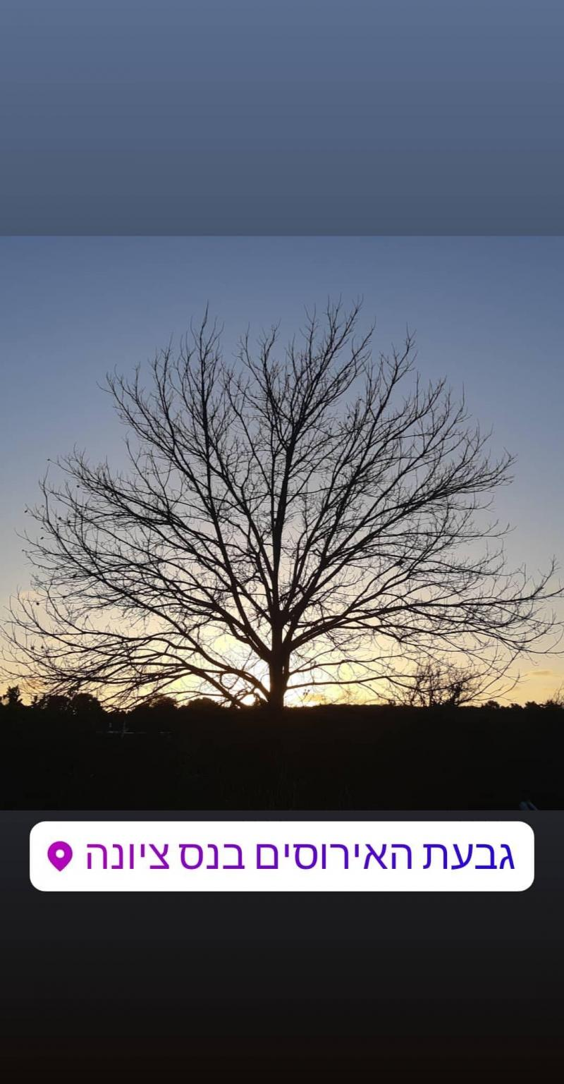 שקיעה בעץ