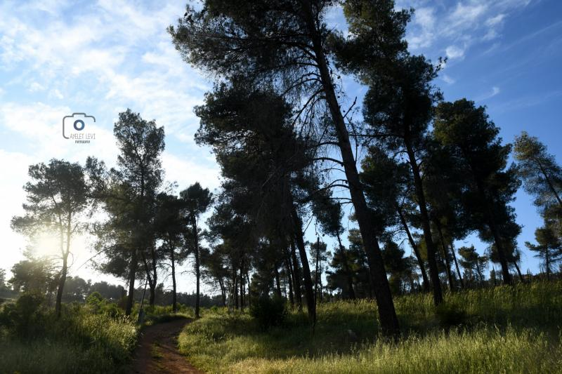 יער רמות