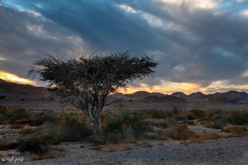 סוף יום במדבר