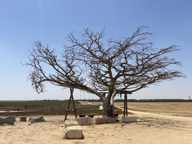 חורשת הבנים והעץ