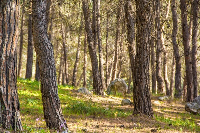 עיצים ביער